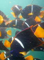 photo of vibrant fish underwater